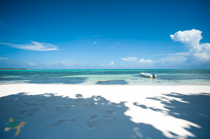 Best of Tulum, live a dream!
